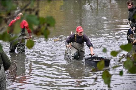 Výlov rybníku Návesník